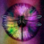 abstract eye, dragonfly, bug
