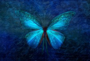 animal, butterfly, insect
